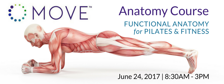 Anatomy Course | Functional Anatomy for Pilates & Fitness