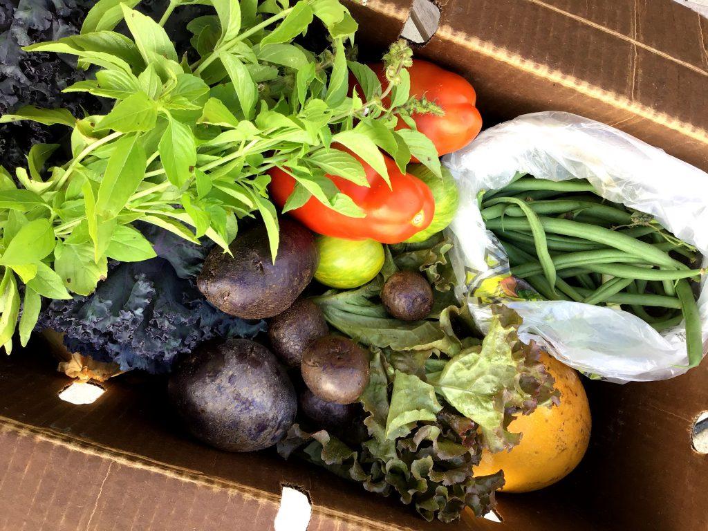 Fresh vegetables from a summer farm share