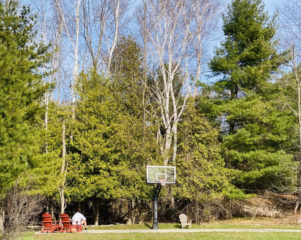 Basketball hoop surrounded by large trees